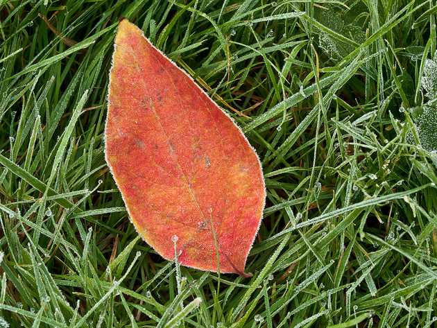 Red, Green, Frost
