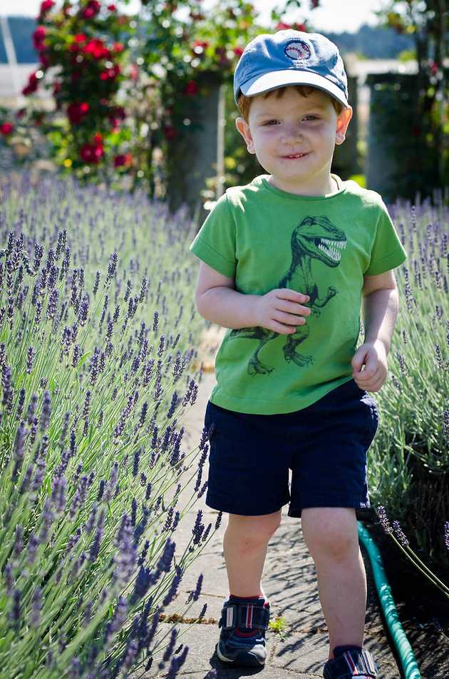 Patrick Walking through Lavender